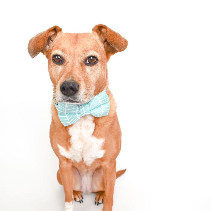 AQUA HERRINGBONE DOG COLLAR AND BOW TIE SET