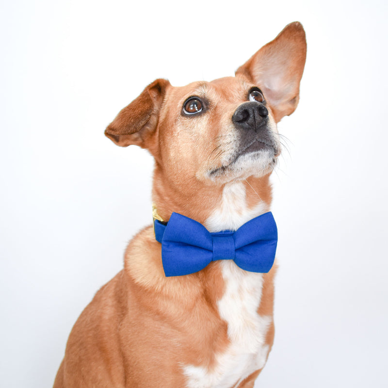 True Blue Dog Bow Tie