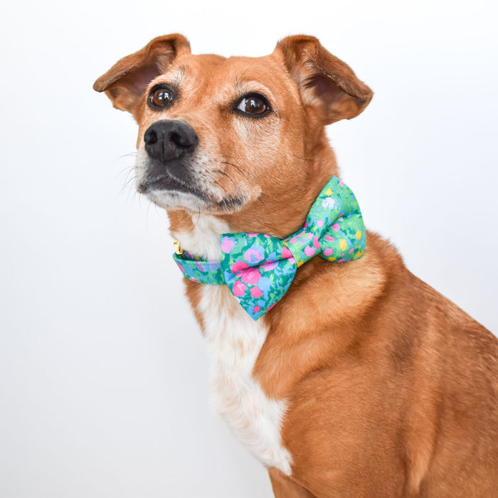 Painted Petals Dog Bow Tie