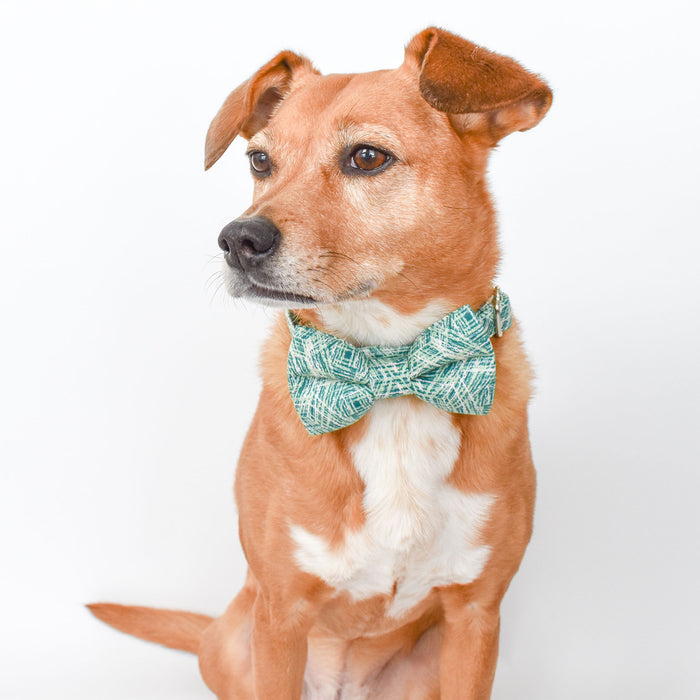 OFF THE GRID GREEN DOG COLLAR AND BOW TIE SET