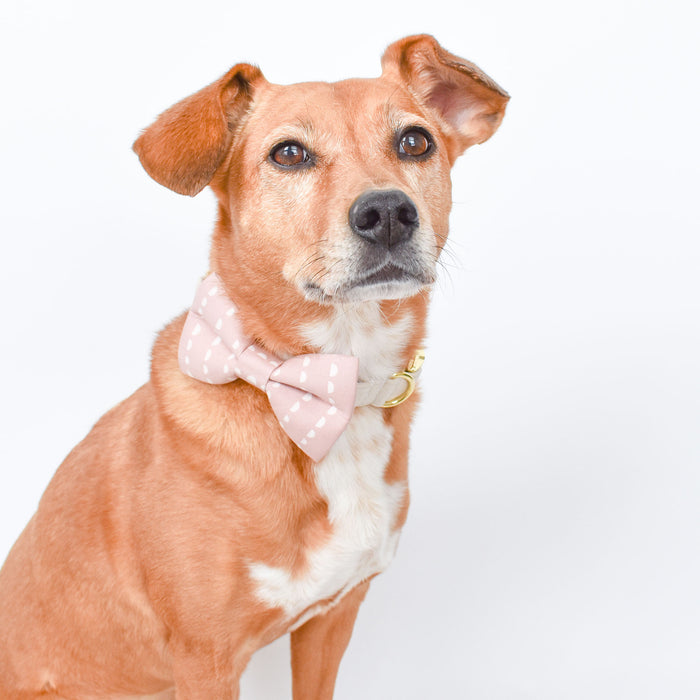 Dusty Rose Semi Circles Dog Bow Tie