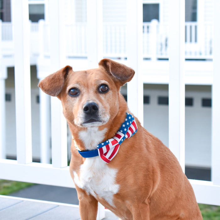 Star Spangled Spirit Dog Bow Tie