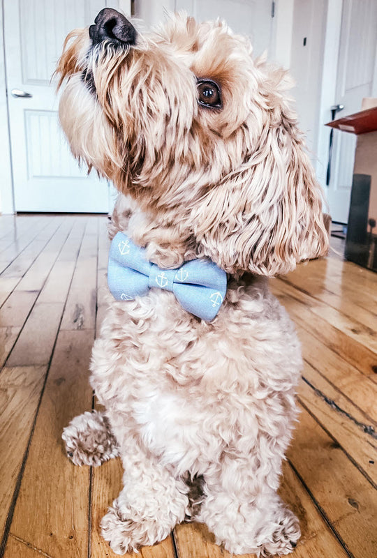Chambray Anchors Away Dog Bow Tie