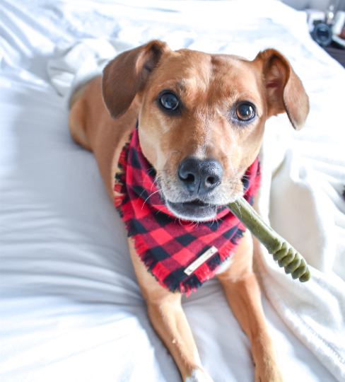 THE MICHAEL - Dog Flannel Fray Bandana