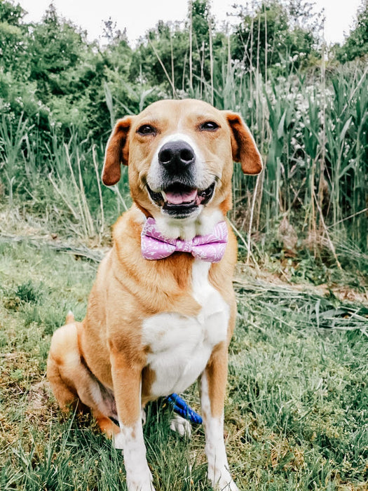 Tropical Lilac Floral Dog Bow Tie