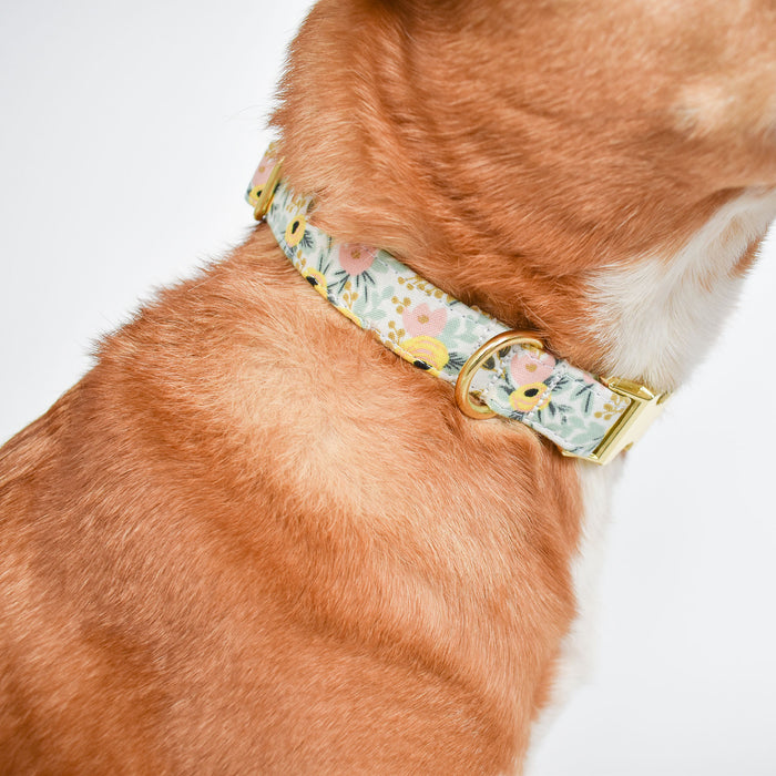 THE OLIVE DOG COLLAR