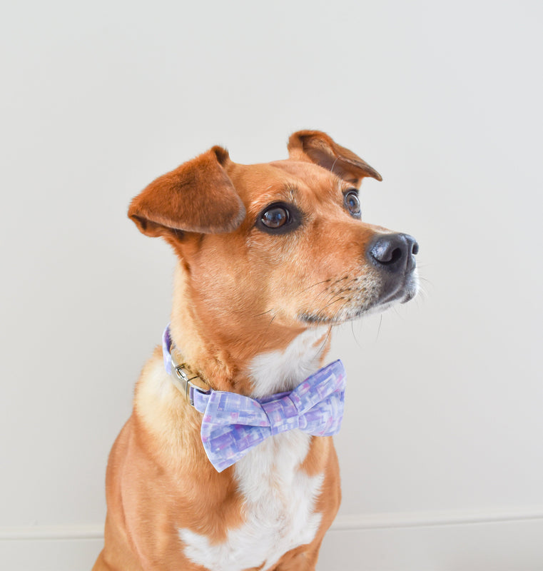 The Royal Linen Dog Bow Tie