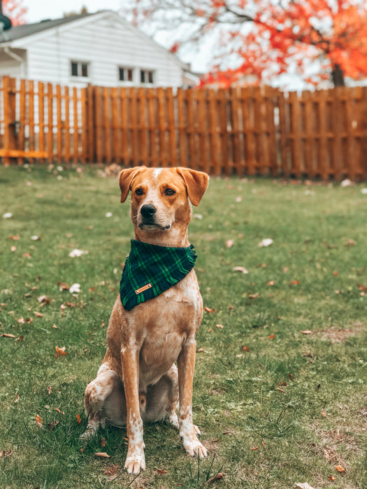 THE MILO - Dog Flannel Fray Bandana