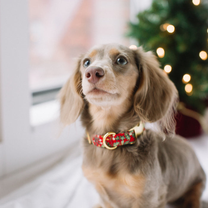 RED HOLIDAY FLORAL DOG COLLAR