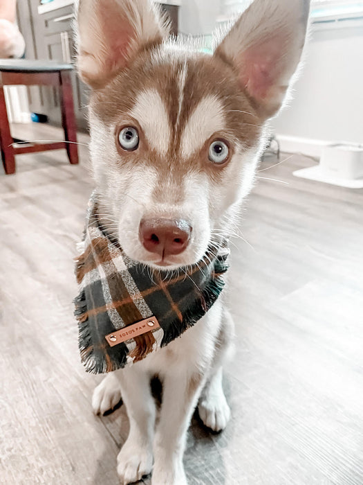 THE SYDNEY - Dog Flannel Fray Bandana