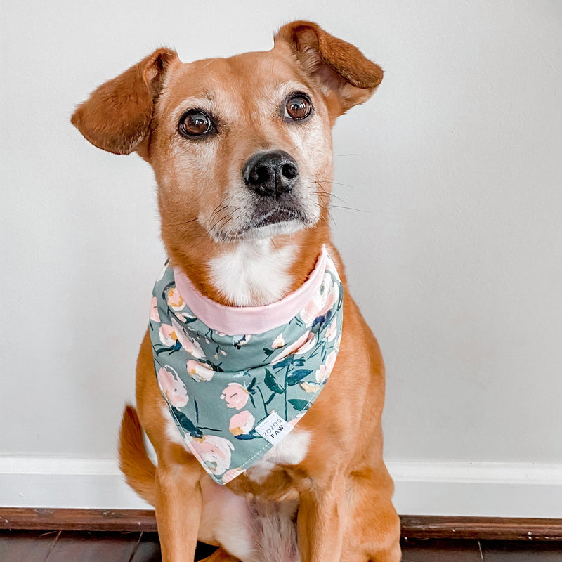 Take Center Sage Floral Dog Bandana