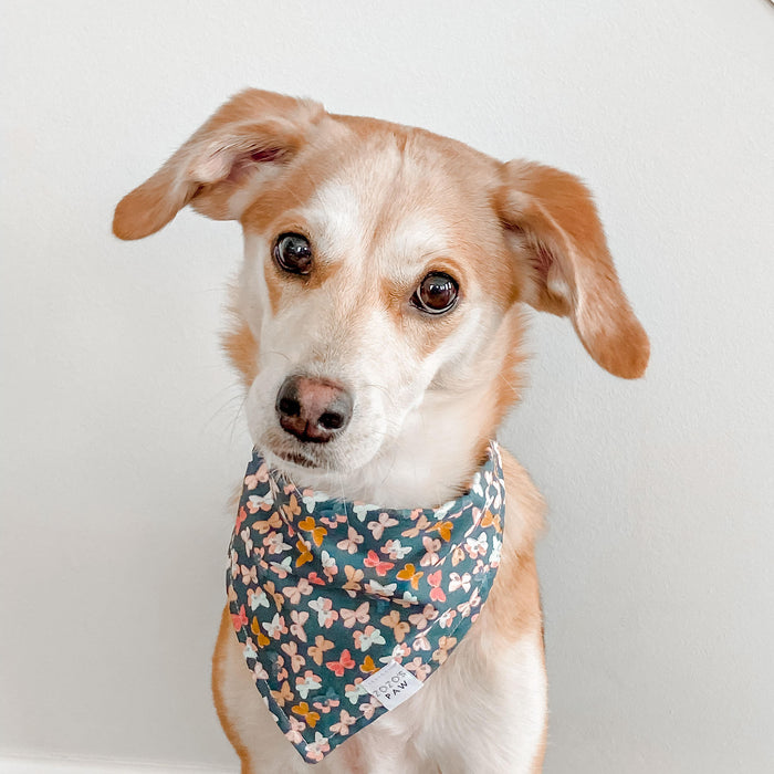 Blushing Butterflies Dog Bandana