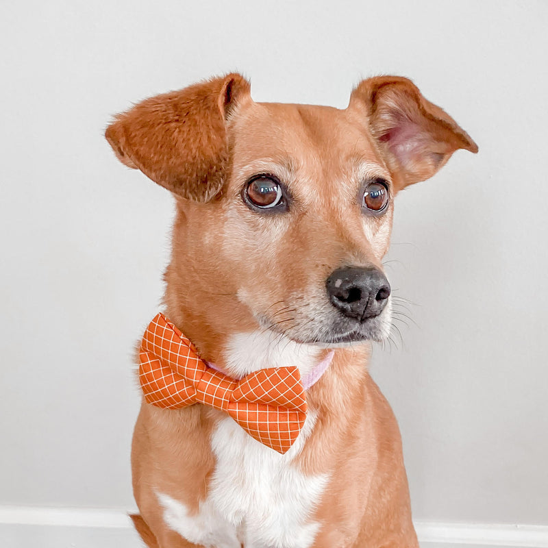 Butterscotch Grid Dog Bow Tie
