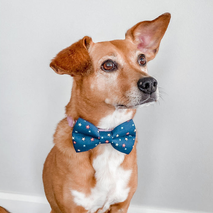 MIDNIGHT STARS DOG COLLAR AND BOW TIE SET