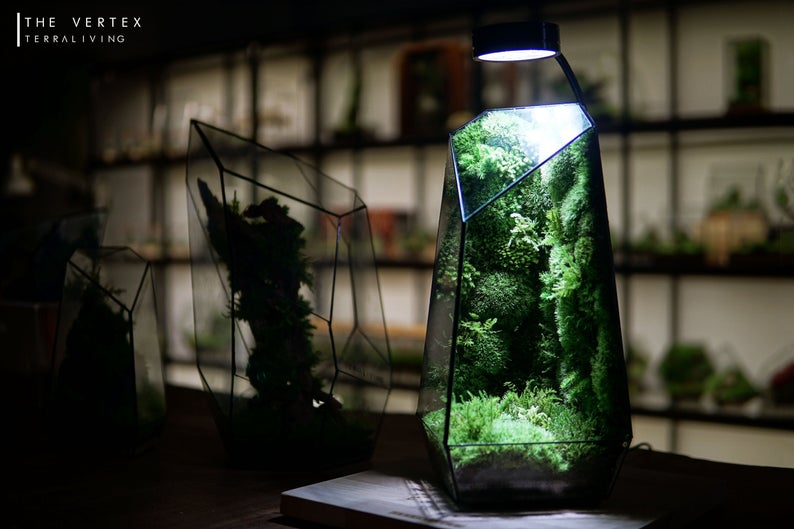 Ready-to-fly: Pre-designed Completed Geometric Terrarium
