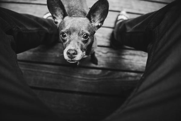 professional pet photography tips