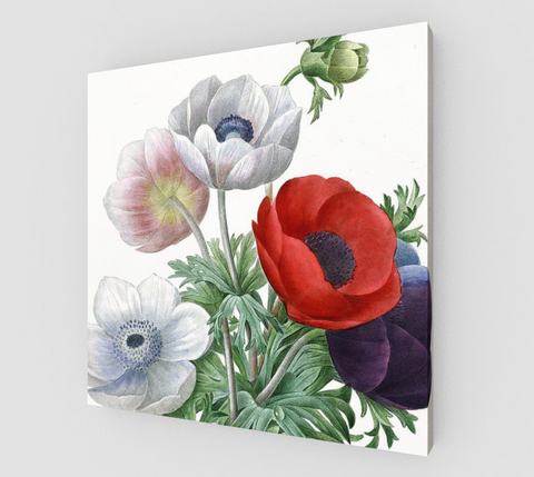 Vintage Botanical Anemones Canvas