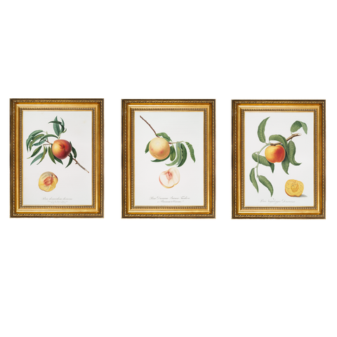 "Vintage ""The Peach"" 2 Botanical Print"