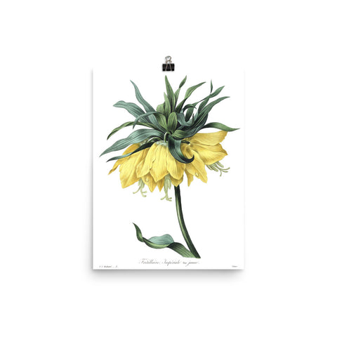 Vintage Botanical Crown Imperial Lily Print