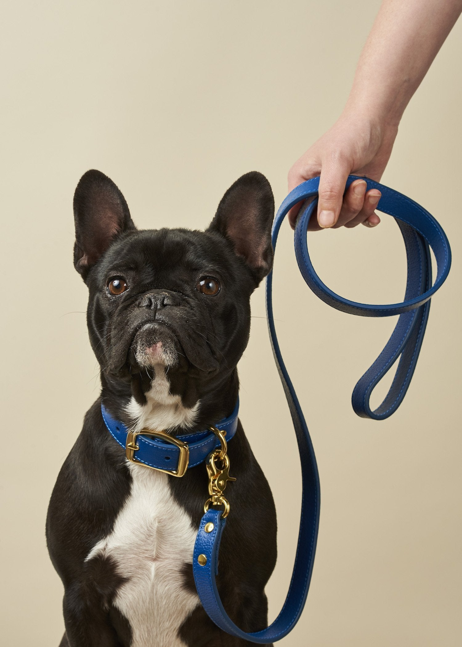 Boco Designer Leather Dog Leash - Royal Blue