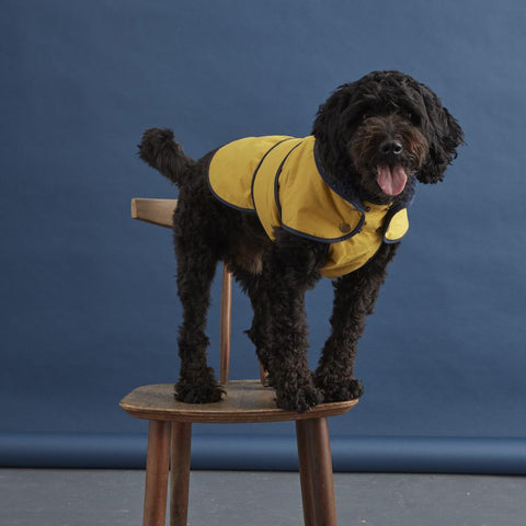 Fetch and Follow Sunshine Rain Jacket - Yellow
