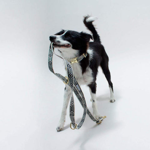 See Scout Sleep Out of My Box City Leash  - Black and Cream