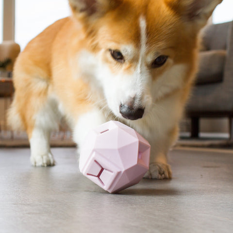 Up Dog The Odin Treat Dispenser - Blush