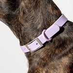 Wild One Collar - Lilac