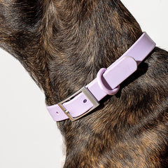 Wild One Wild One Collar - Lilac