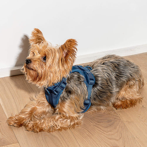 Wild One Wild One Harness - Blue