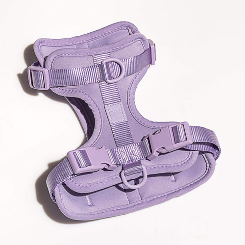 Wild One Wild One Harness - Lilac