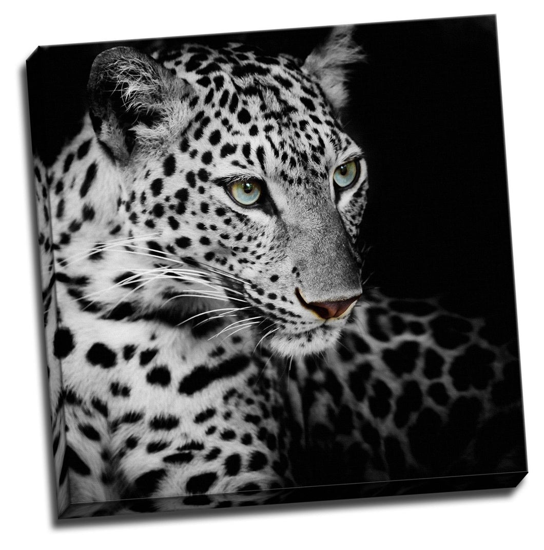 Black Leopard Head Framed Canvas Photo Wall Art Print Square Blue eye