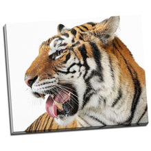 Tiger Face Framed Canvas Photo Art Animal Nature Print Home Decor Wall