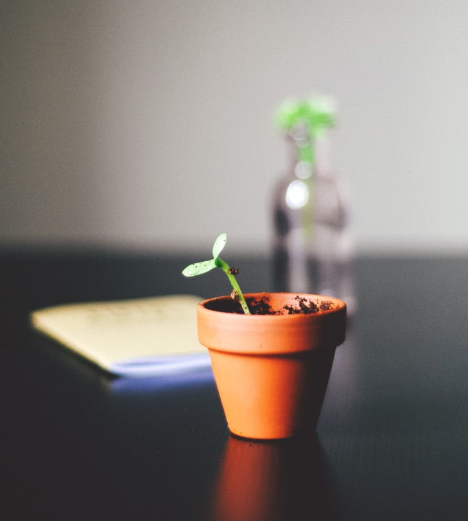 growing plant in a pot
