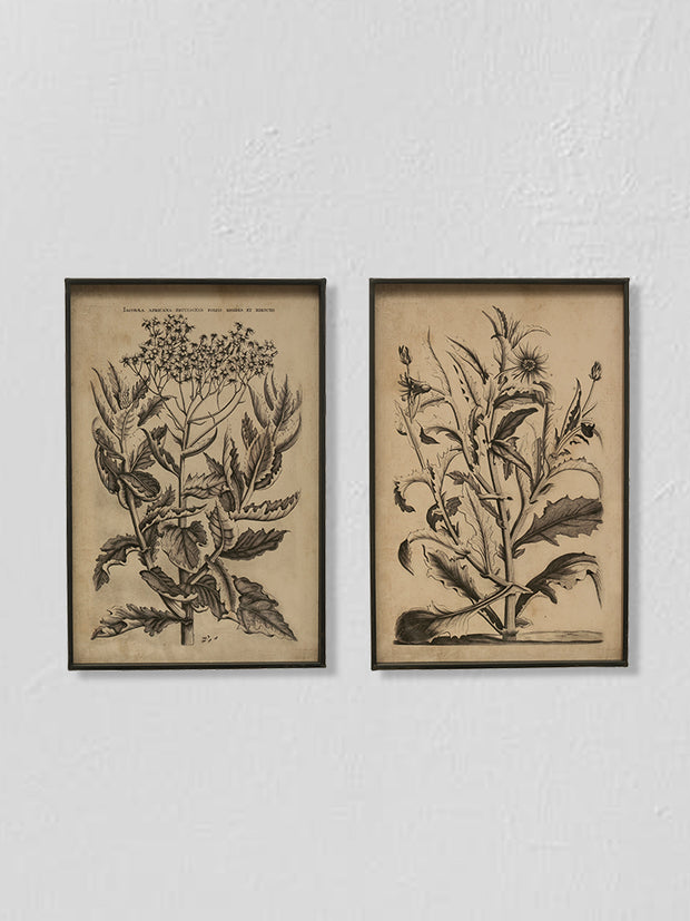 Metal Framed Wall Decor w/ Floral Image / Set of 2 - Cloth + Cabin