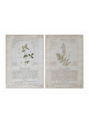 Vintage Botanical Grommet Wall Canvases / Set of 2 - Cloth + Cabin