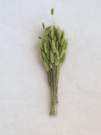 Bunny Tail Grass Bunch - Cloth + Cabin
