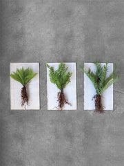 Faux Ferns w/ Exposed Roots, Set of 3 - Cloth + Cabin