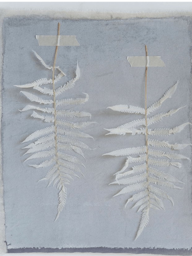 Dried Fern Leaves, Cream / Bundle of 5 - Cloth + Cabin