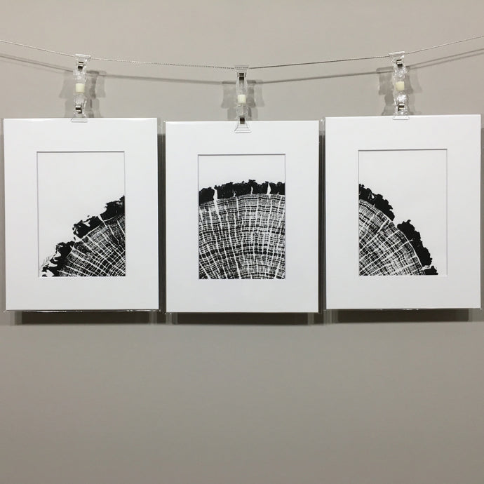 Hickory tryptic, tree ring prints