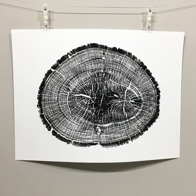 Hickory tree, tree ring art, tree ring print