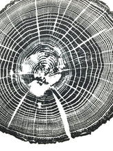 woodcut print, tree rings, oak tree