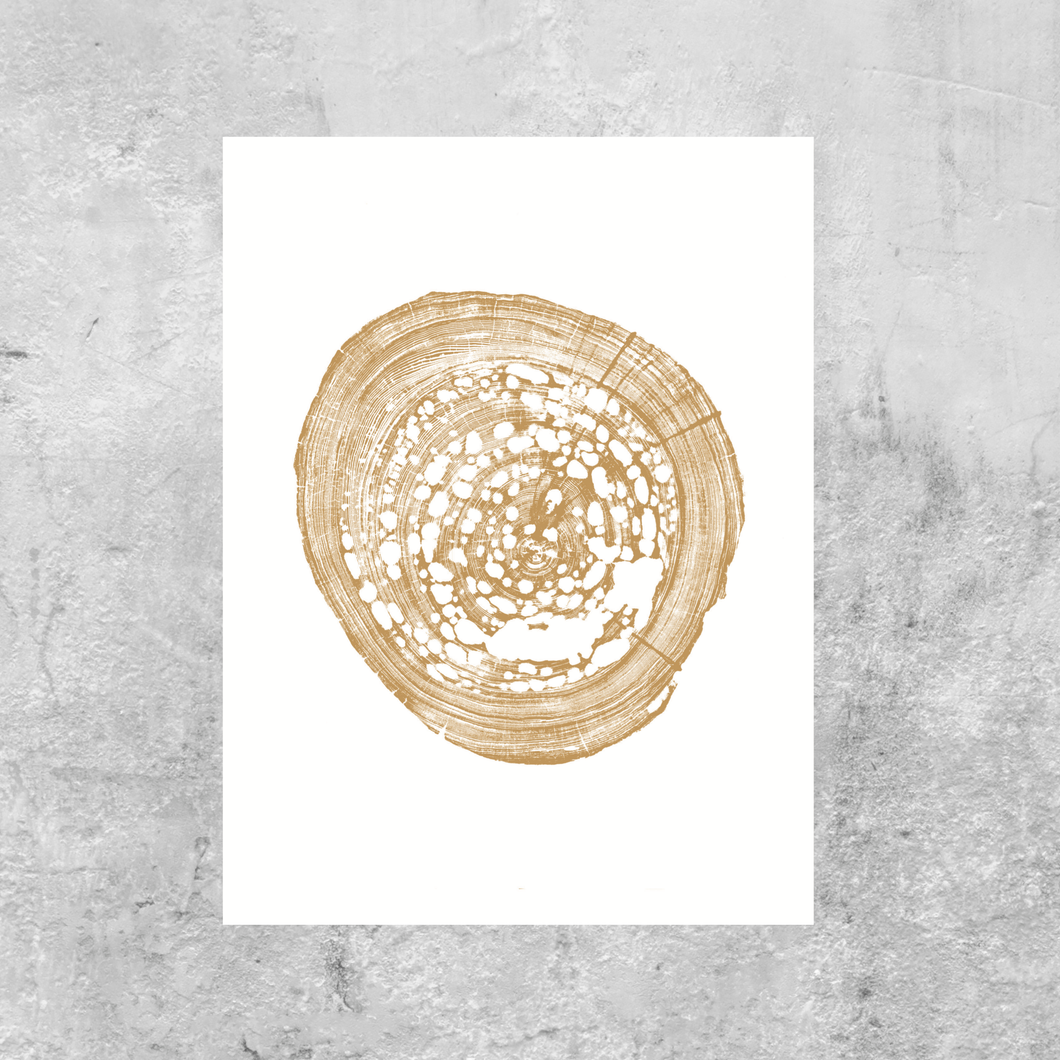 Pecky sinker cypress tree ring print