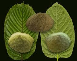 Energizing kratom powders