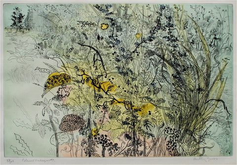Anthony Gross Coloured Undergrowth