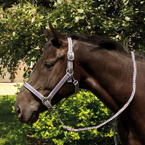 Rhinegold Multi Stripe Nylon Headcollar & Lead Rope Set with Padded Headpiece And Noseband