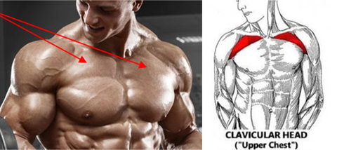 how to hit the upper pecs