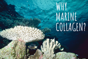 Why Marine Collagen and Why is it Important for a Healthy Lifestyle
