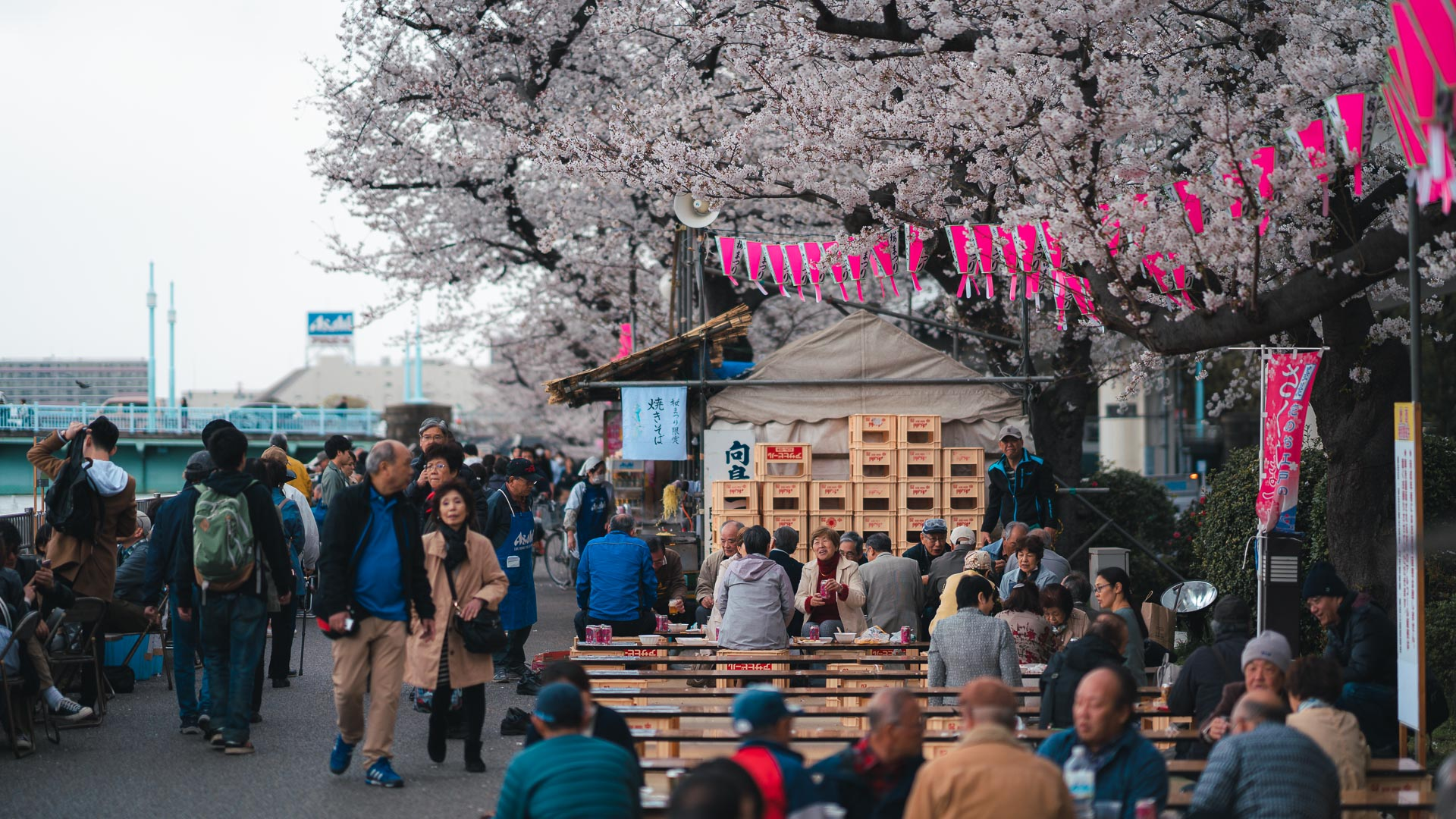 When is the best time to visit Japan - Pat kay Blog