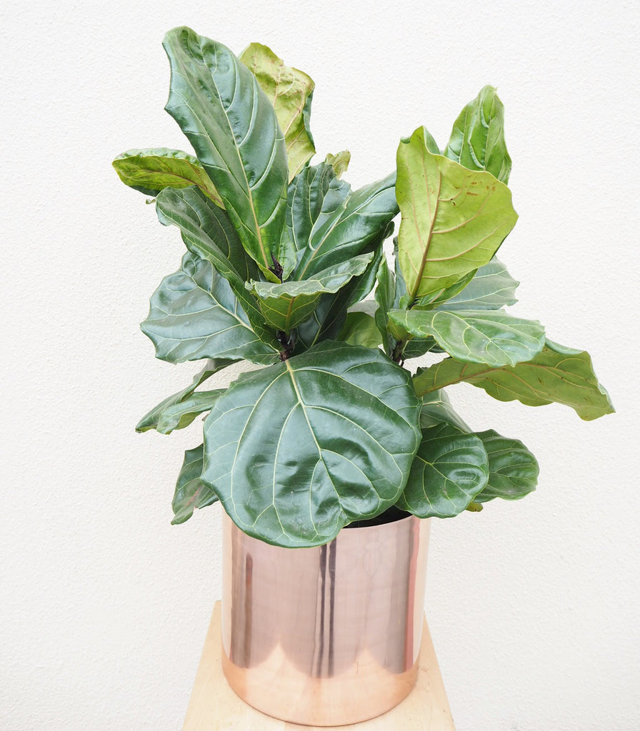 How to care for your indoor plants in the cooler months